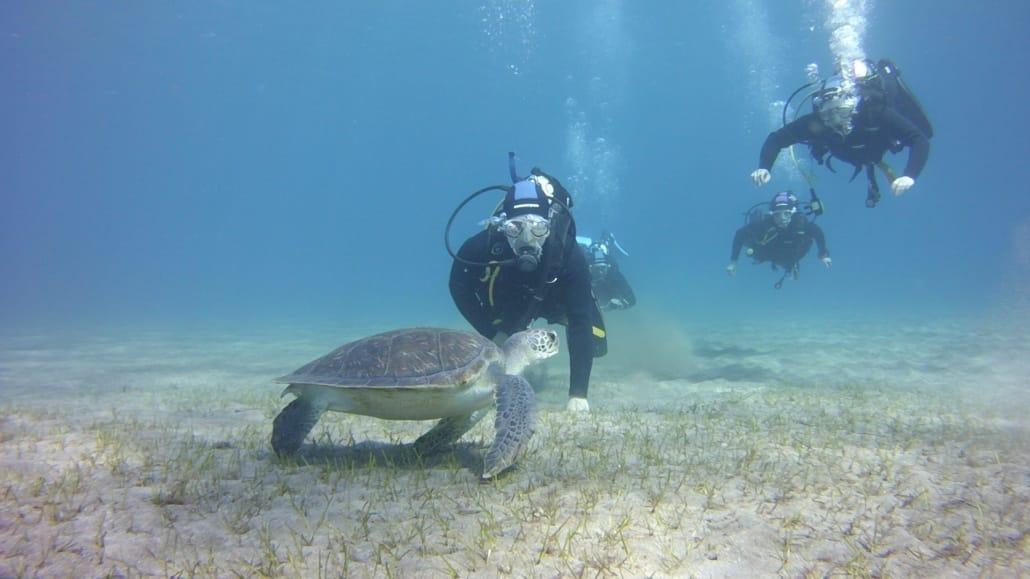 inmersión en Abades con Tortuga