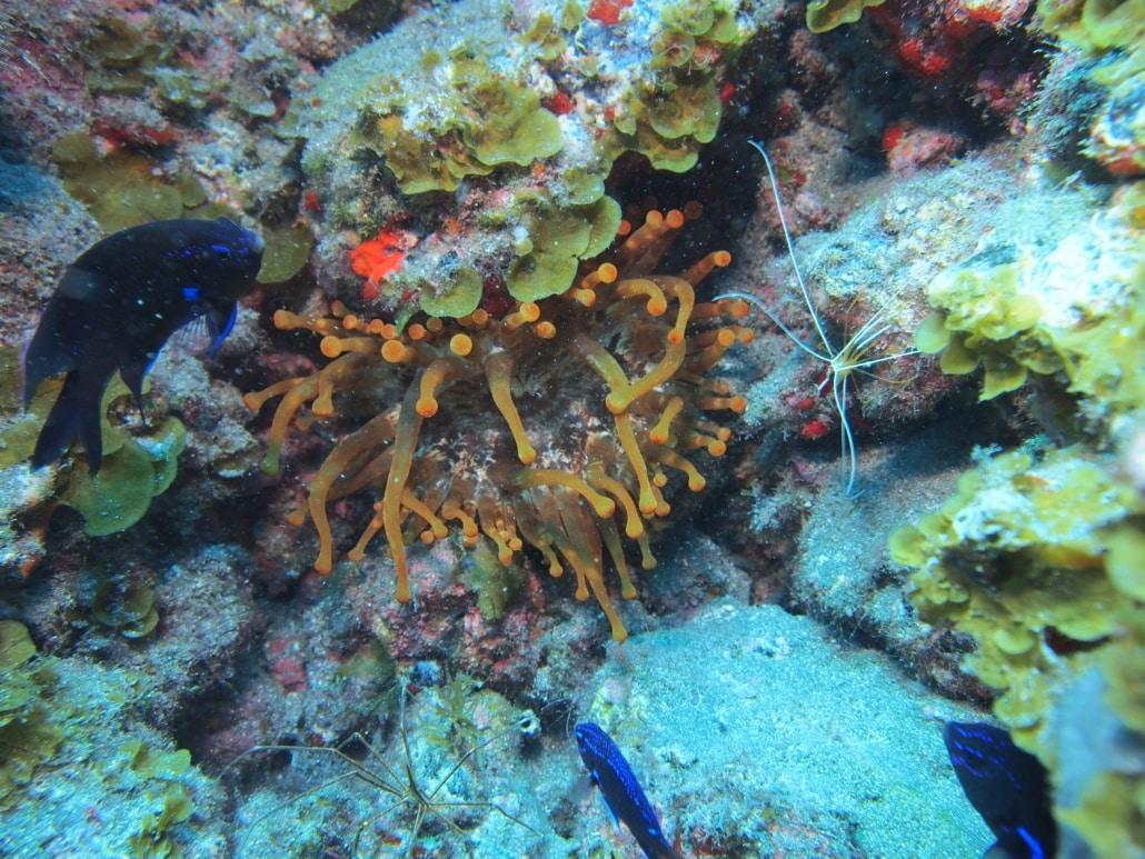 Anemona de mar