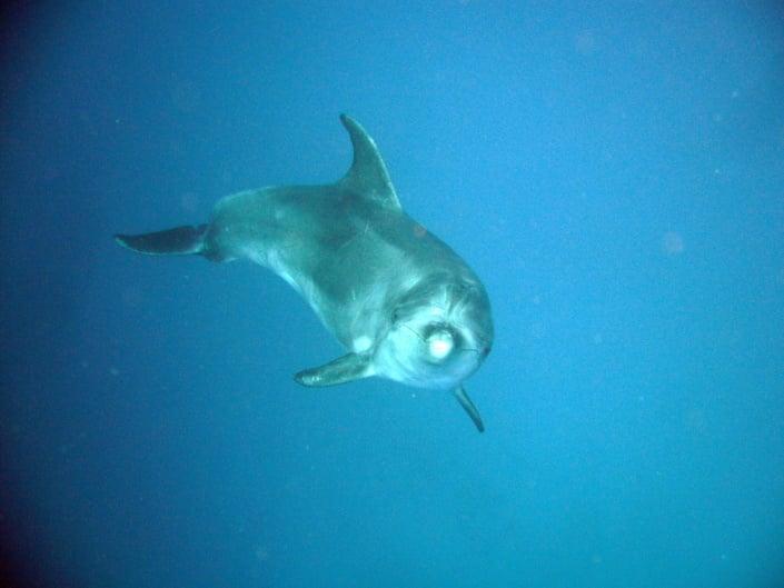 Buceando con delfines