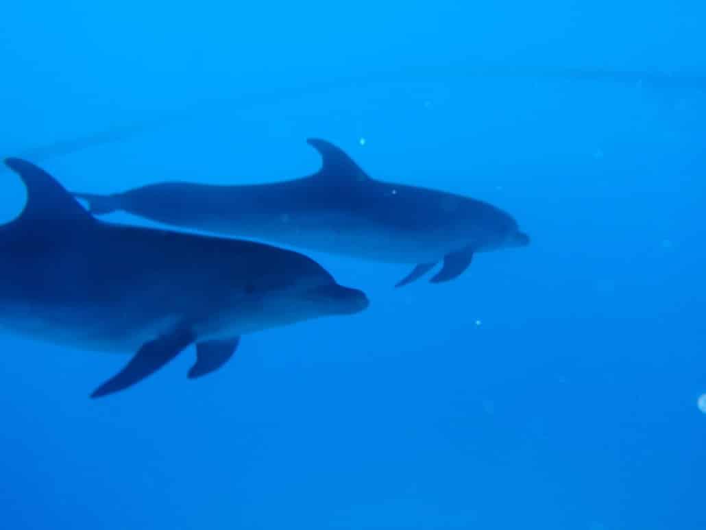 Junto con delfines
