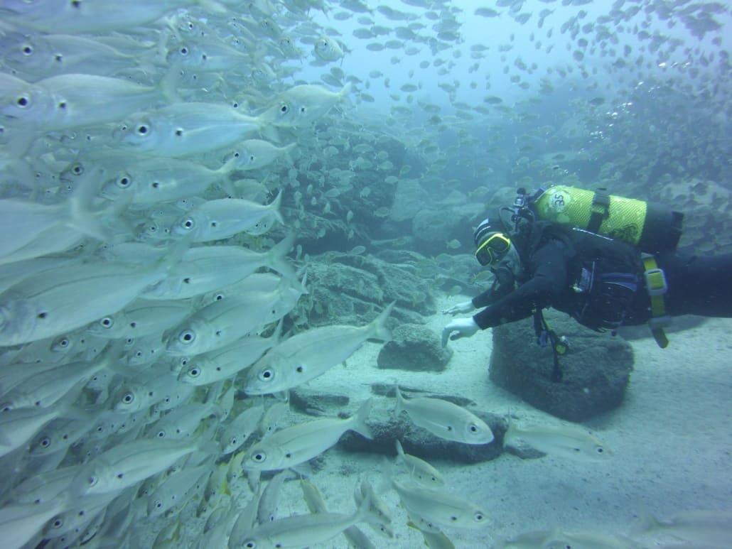 inmersión con un banco de peces