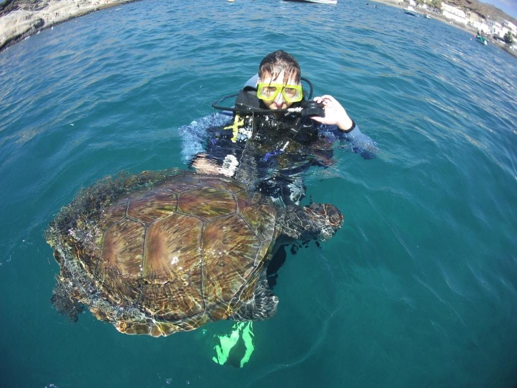 nadando con tortugas