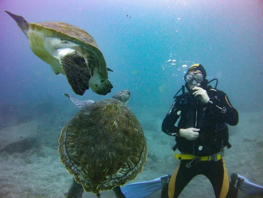 buceo con Tortugas marinas