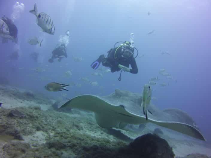 inmersión con rayas acuarium