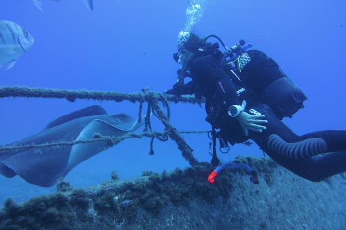 buceo con rayas acuarium