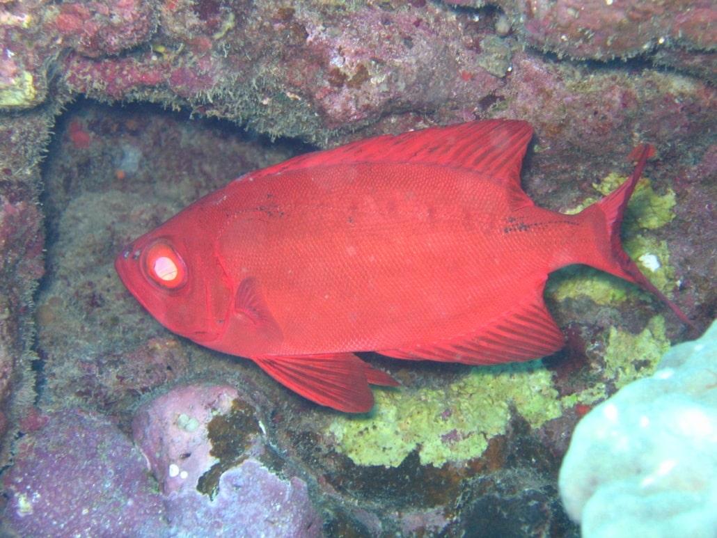 pejeperro marino