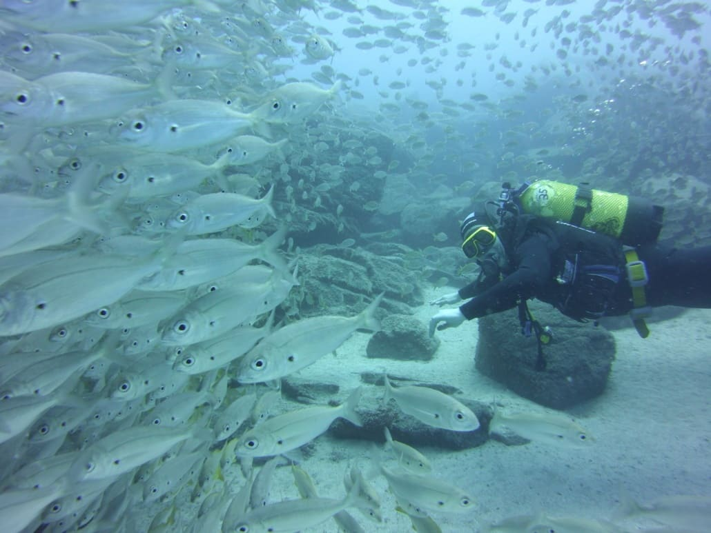 inmersión con banco de peces roncadores