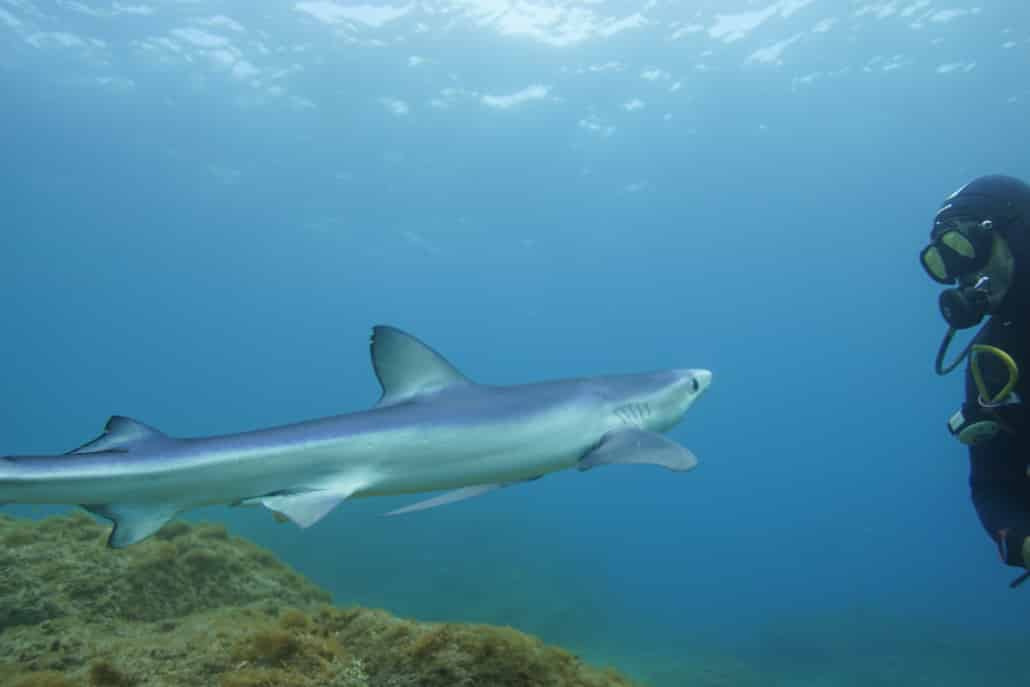 buceando con tiburon en Valito