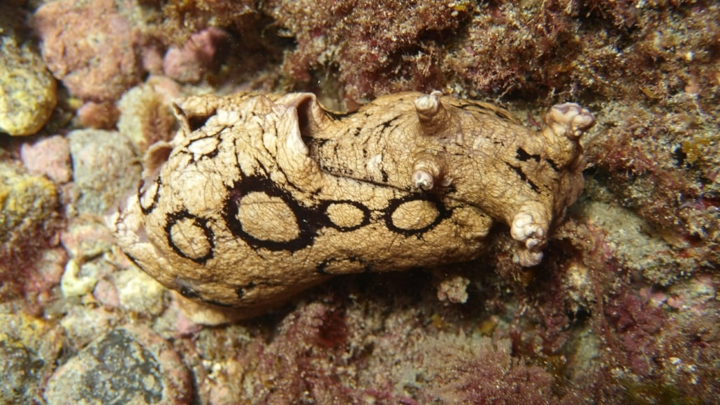 Babosa marina