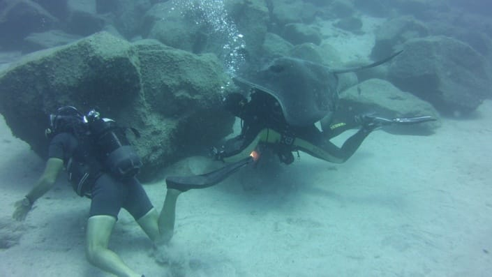 inmersión en el Palmar