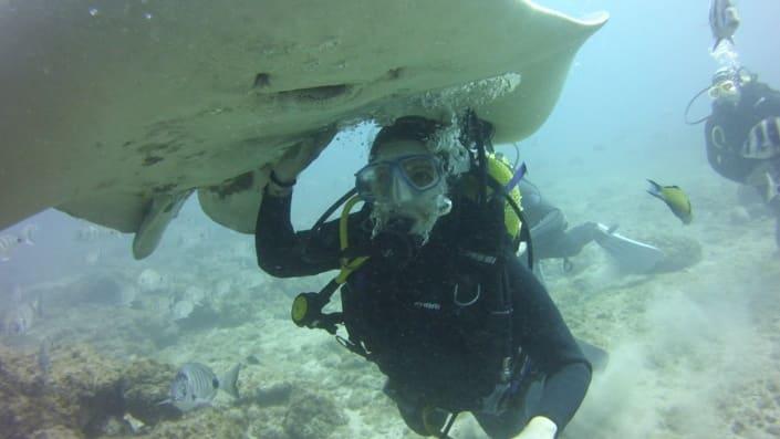 inmersión con rayas en acuarium