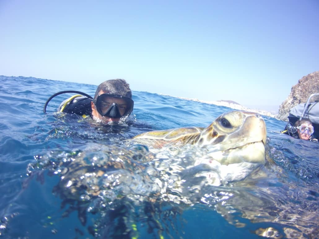 inmesión con tortuga marina